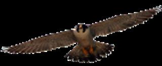 MVMS Falcons